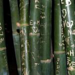 Botschaften auf Bambus