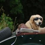 Hund an Bord -