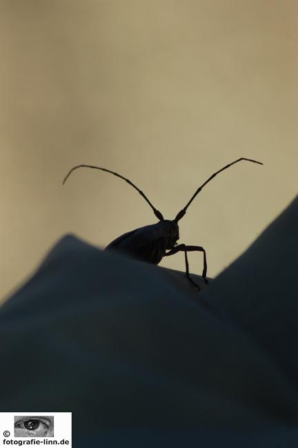 Insekt auf Eriks Hemd
