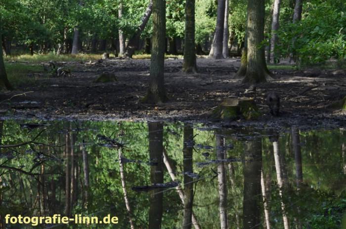 Spiegelung in grünem Wasser