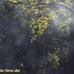Rauchschwaden im Wald
