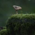 Pilz auf bemoostem Stein