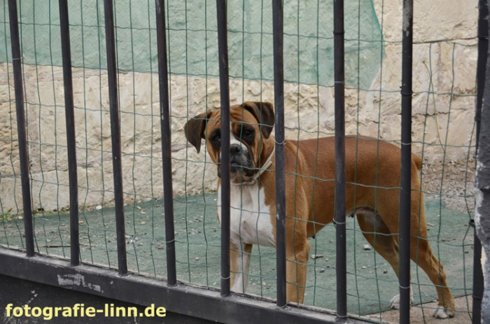 Hund Porto Cristo