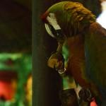 Papagei als Kundenfänger