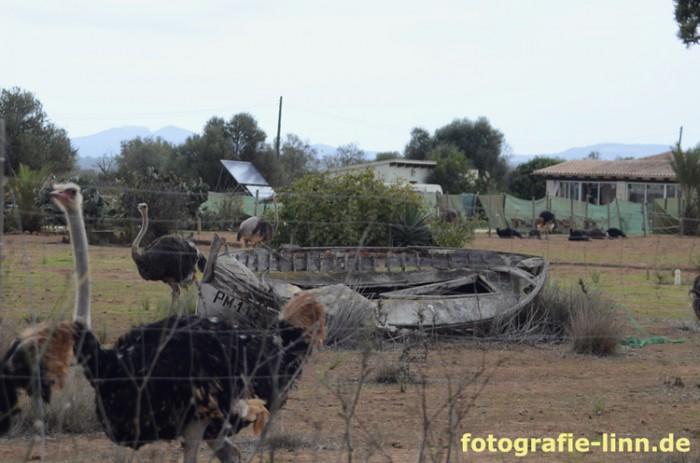 Straußenfarm Artestruz