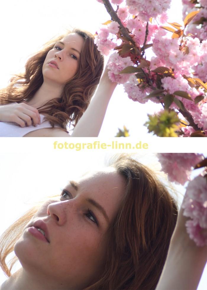 Kirschblüten High key