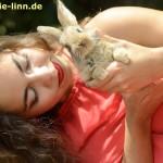 Kaninchen schaut dich an