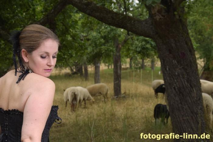 romantisch mit Schafen