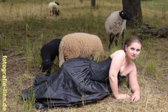 das schwarze Schaf 2