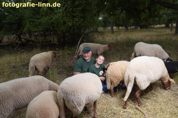 Vater und Tochter mit Schafherde