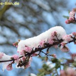 Winter-Schneeball