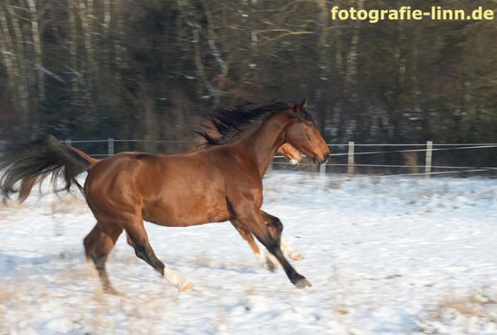 Zwei Pferde im Schnee