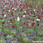 bunte Frühlingswiese