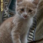 Kätzchen im Basar