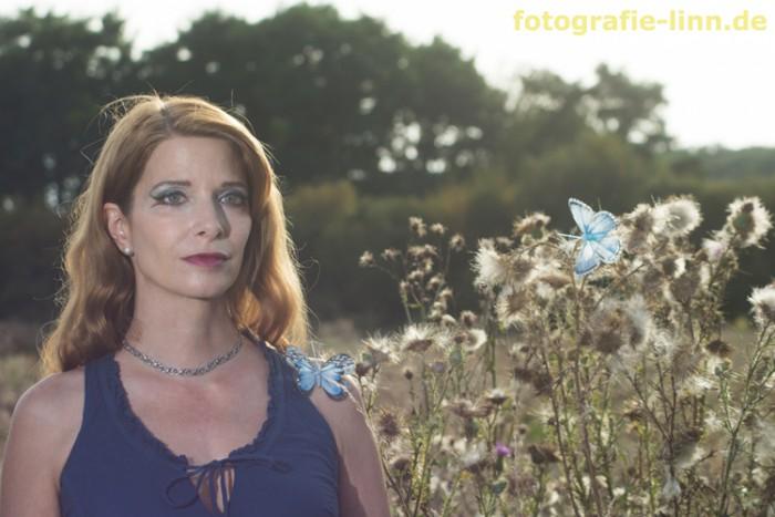 Disteln & Schmetterlinge