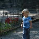 Kind im Kobelt-Zoo
