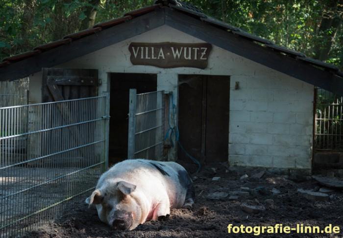 Villa Wutz