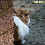 Kaninchen-Portrait
