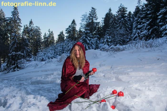 Rote Rosen im Schnee