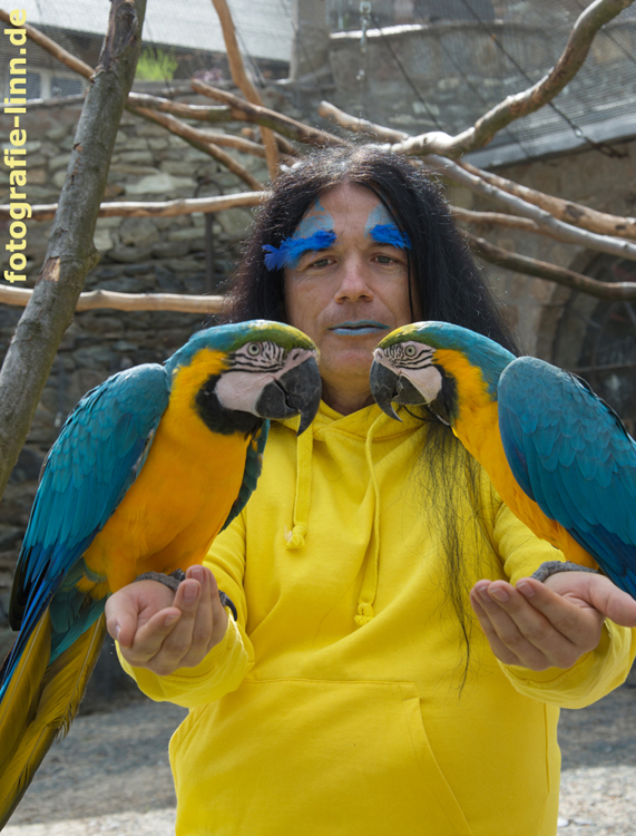Papageien-Symmetrie