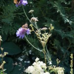 Blüten mit Schmetterlingenn