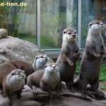 Ottergruppe