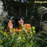 gelbe Ástern und Gräser