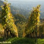 Blick von den Weinbergen