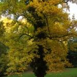 bemerkenswerter Baum
