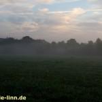 Morgennebel über den Wiesen