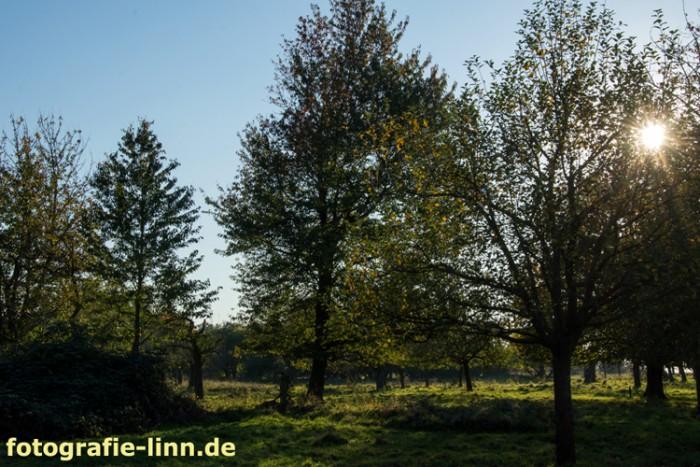 Sonnenstrahlen hinter Bäumen