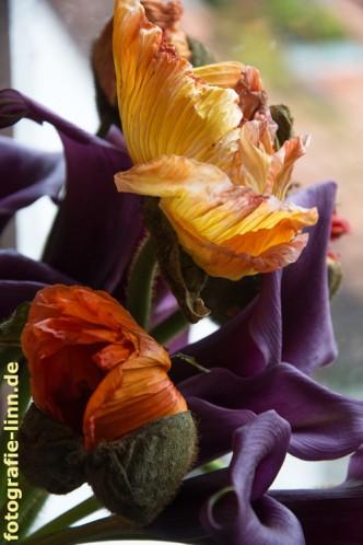Komplementärkontrast orange lila