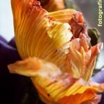 Orangefarbene Mohnblüte